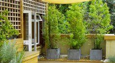 Para terminar el especial de patios pequeños, donde ya revisamos tips de diseño, materiales y maceteros, culminamos con las plantas.