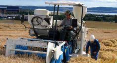 България е на 11-то място в ЕС по производство на зърно