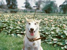 Cachorrinha abandonada derrotou um câncer e virou uma ótima modelo