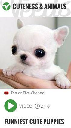Funniest Cute Puppies | #5hworldtour2016 #oldwestpickuplines | http://veeds.com/i/F2OtNhzSPjR8Bv5x/cuteness/