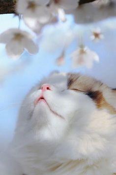 Cute Little Kittens, Kittens Cutest, Pretty Cats, Beautiful Cats, Cute Baby Animals, Funny Animals, Kitten Wallpaper, Cute Cat Memes, Cat Icon