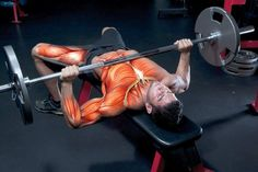 Develop a Big-Time Bench Want to turn every head in your gym? Give us 12 weeks. By Matt Rhodes