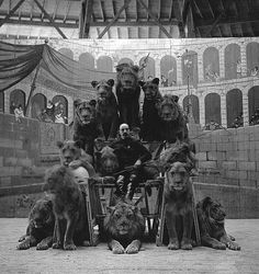 Old school circus lion tamer with his lions. This didn't go wrong as often as you might expect. But when it did, it went REALLY wrong. Old Circus, Night Circus, Vintage Circus, Dark Circus, Creepy Vintage, Old Pictures, Old Photos, Group Of Lions, Lion Noir