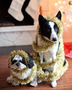Tinsel dogs. very good sports