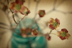 'Spring Things' - beautiful original signed fine art #photography by Alicia Bock, from her @Etsy shop