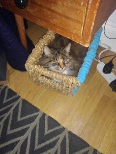 Cute cat basket Cat Basket, London, Cats, Animals, Gatos, Animales, Kitty Cats, Animaux, Animal Memes