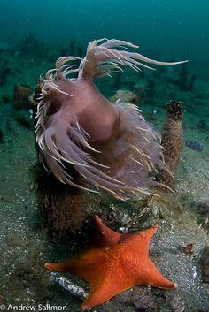 Underwater Photographer Andrew Sallmon's Gallery