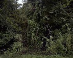 Near Camp Camden, Kershaw County, South Carolina (branch camp under Fort Jackson, SC) 2010.