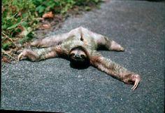 Ha! Those big metal cows can't see me!  sloth | Tell Me Something I Dont Need: Cromer key