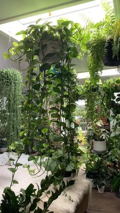 Room With Plants, House Plants Decor, Wall Of Plants, Plant Rooms, Indoor Garden, Indoor Plants, Home And Garden, Plants On Balcony, Small Balcony Decor