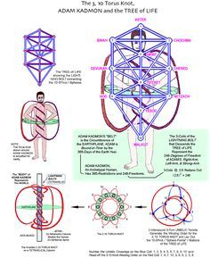 Meru Foundation Research: The Torus Knot, Adam Kadmon, and the Tree of Life… – Gardening for beginners and gardening ideas tips kids Les Chakras, Sacred Geometry Symbols, Alchemy Symbols, Spirit Science, Occult Art, Flower Of Life, Book Of Shadows, Tree Of Life, Knowledge