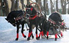 Свадебная прогулка в санях в лучших русских традициях