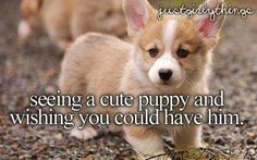 Seeing a cute puppy and wishing you could have him. #justgirlythings