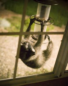 Oh hey! Just.. making sure your bird feeder was full.. you know. #animals #funny #wildlife