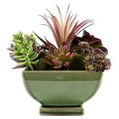 Small Succulent Arrangement in Square Pot