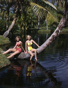 Nora Carrol and Lois Duncan Steinmetz: Sarasota, Florida (taken for Collier's at Sarasota Jungle Gardens): photo by Joseph Janney Ste. Sarasota Florida, Old Florida, Vintage Florida, Vintage Bathing Suits, Vintage Swimsuits, Floride Vintage, Sarasota Jungle Gardens, Florida Images, Glamour