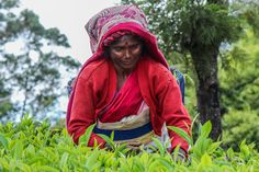 fair trade certified tea, coffee, chocolate, etc BUY responsibly. Help stop the exploitation on poverty-stricken farmers