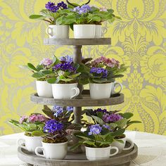 What a cute idea for house plants: African violets in teacups displayed on a tiered cupcake tray.
