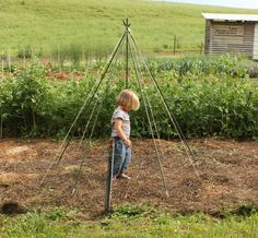 bean trellis teepee.  simple center pole with strings, bigger than this pic, taller also.  strings make the teepee.