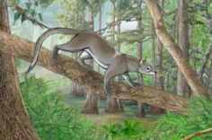 55 million-year-old ancestor of lions, tigers, and bears (oh my!) has been discovered   I Fucking Love Science