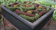 Mini knot garden