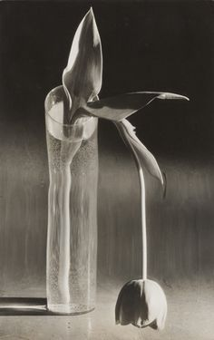 DIA opens exhibition of photographs by André Kertész   Photography