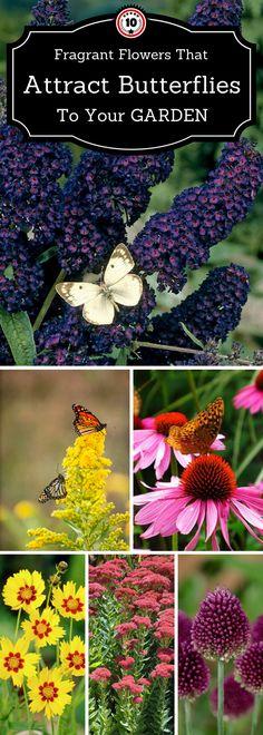 10 flowers that attract  butterflies
