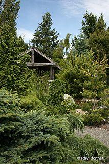 Conifer Rock Garden