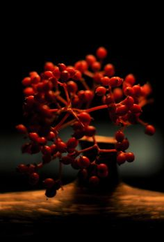 tiny red fruits with my work . photo by me.