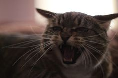 8 Critical Behavior Changes to Watch Out For In Your Cat