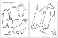 Antarctic animals coloring page