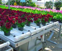 Greenhouse Tables, Greenhouse Growing, Greenhouse Plans, Small Greenhouse, Aqua Farm, Garden Center Displays, Farm Cafe, Commercial Greenhouse, Expanded Metal