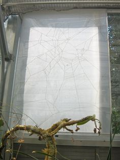 """Under the Influence, by Gail Wight. Photo: Hannah Long, Berkeleyside    """"Another piece in the exhibit combines a scientist's experiment with the techniques of an artist. Under the Influence, by Gail Wight, features sheets of vellum burned with images of spiders' webs. Each web, which was created by a spider under the influence of drugs such as LSD, marijuana, or caffeine, is interestingly irregular and jagged."""" Public Garden, Garden S, Science Art, Science And Nature, Under The Influence, Plant Species, Spiders, Caffeine, Colorful Flowers"""