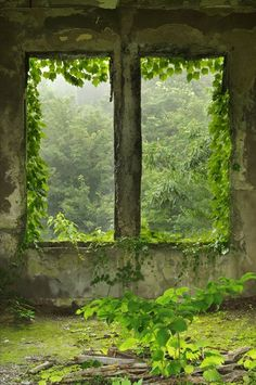 Vines coming through the window. Nature has taken over abandoned house. Old Buildings, Abandoned Buildings, Abandoned Places, Abandoned Castles, Abandoned Mansions, Mansion Homes, Window View, Rear Window, Through The Window
