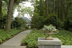 Ground cover -  Pachysandra - hardy in New England