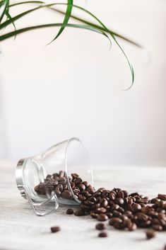 Discover our great selection of free coffee stock photos. Find pictures of coffee mugs, coffee beans, coffee cups, and more unique coffee images. Fresh Coffee Beans, Ground Coffee Beans, Coffee Photography, Food Photography, Coffee Grain, Best Coffee Grinder, Coffee Grinders, Decaf Coffee, Coffee Cup