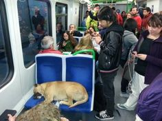 Odd Train Passenger Becomes Social Media Star and Gets Rescued