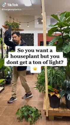 Indoor Garden, Garden Plants, Indoor Plants, House Plants Decor, Plant Decor, Household Plants, Growing Plants Indoors, Inside Plants, Plant Aesthetic