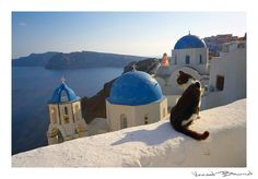 Santorini, Greece - cats - Oia, Kyklades