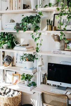 Shelving with Plants