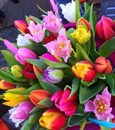 💞🌷Good afternoon🌷💛🌷wonderful feeling with Tulips from Amszerdam🌷💞🌷 Longing for springtime🌷💛🌷have a nice Sinday my dear friends🌷💞🌷 . Beautiful Flowers Wallpapers, Beautiful Flowers Garden, Beautiful Flower Arrangements, Exotic Flowers, Amazing Flowers, Beautiful Roses, Tulips Flowers, Flowers Nature, Pretty Flowers