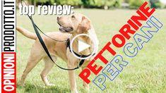 ⫸Pettorine per cani, regolabili, fisse o ergonomiche: ti spiego perché usarle del 2020 Labrador, Labradors, Labs