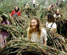 hippie communes - Google Search