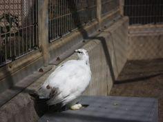 茶臼山動物園05