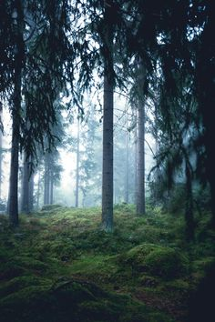 Mysterious vibes in the foggy woods Central Finland - Nature/Landscape Pictures Summer Nature Photography, Woods Photography, Popular Photography, Photography Flowers, Photography Ideas, Abstract Nature, Belleza Natural, Landscape Photographers, Nature Pictures