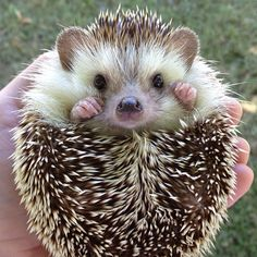 Biddy the Hedgehog on Instagram is the only thing that makes sense in this world.