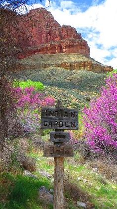 Bright Angel Trail: Indian Garden - halfway....a great place for a break