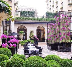 Roof, furniture, color: Buxinhos e Orquídeas Vandas encantam o espaço