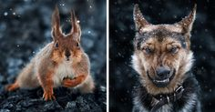 10+ Stunning Animal Portraits By Ukrainian Photographer Sergey Polyushko | Bored Panda