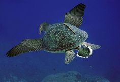 Turtle Vs Pigeon The Most Weird And Scary Photoshopped Hybrid Animals You'll Ever See Photoshopped Animals, World Turtle Day, Third Grade Art, Animal Mashups, Animal Tumblr, Turtle Dove, Creature Feature, Character Design Inspiration, Mythical Creatures